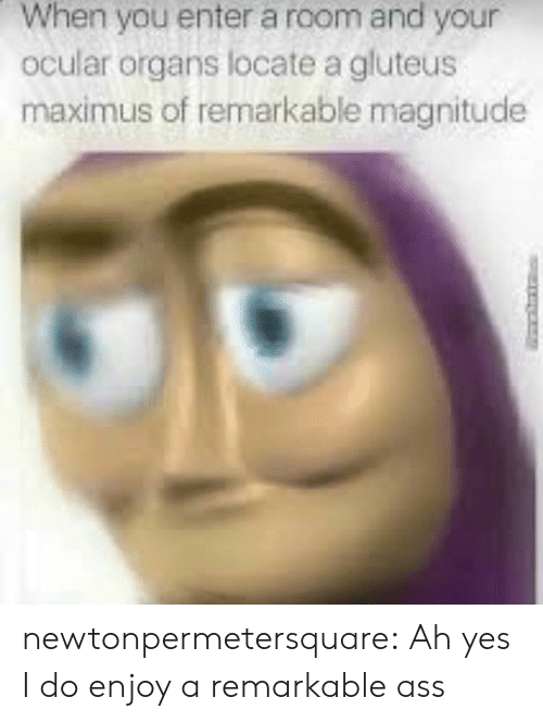 Ass, Maximus, and Tumblr: When you enter a room and your  ocular organs locate a gluteus  maximus of remarkable magnitude newtonpermetersquare:  Ah yes I do enjoy a remarkable ass