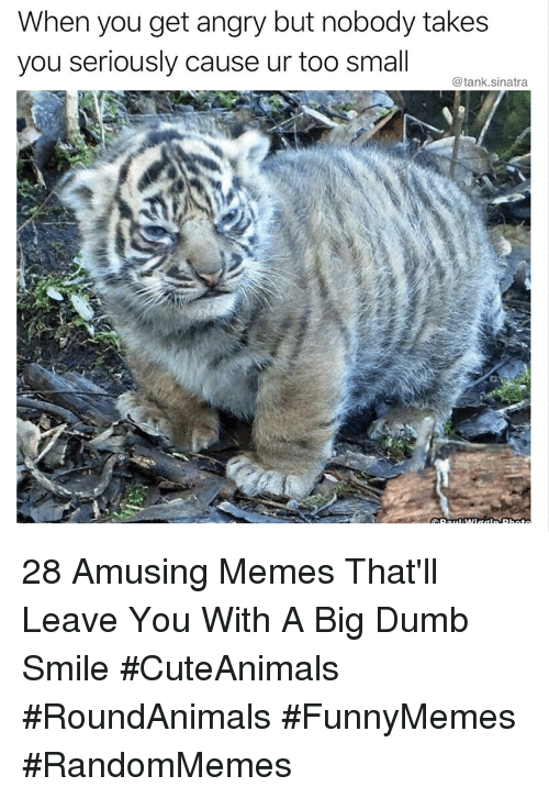Dumb, Memes, and Smile: When you get angry but nobody takes  you seriously cause ur too small  @tank.sinatra 28 Amusing Memes That'll Leave You With A Big Dumb Smile #CuteAnimals #RoundAnimals #FunnyMemes #RandomMemes