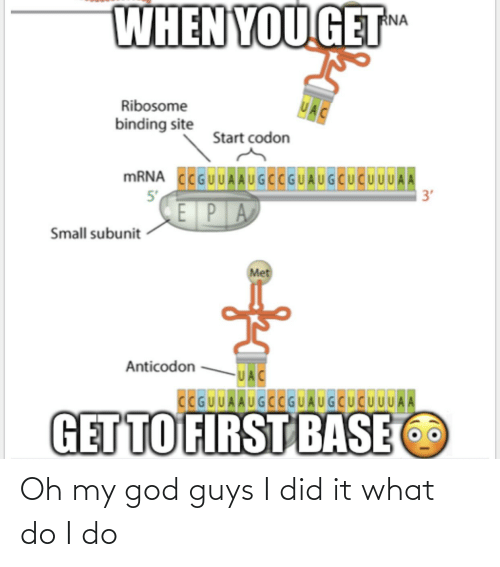 epa: WHEN YOU GET  RNA  UAC  Ribosome  binding site  Start codon  MRNA CCGUUAAUGCCGUAUGCUCUUUA A  5'  3'  EPA  Small subunit  Met  Anticodon  UAC  CCGUUAAUGCCGUAUGCUCUUUAA  GET TO FIRST BASE Oh my god guys I did it what do I do