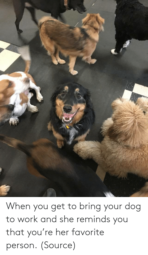 person: When you get to bring your dog to work and she reminds you that you're her favorite person. (Source)