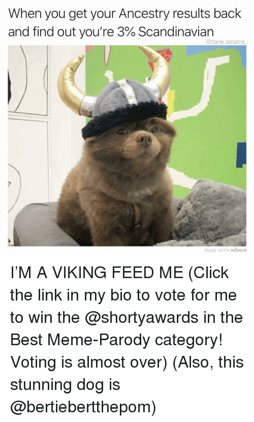 best meme: When you get your Ancestry results back  and find out you're 3% Scandinavian  @tank.sinatra  MADE WITH MOMUS I'M A VIKING FEED ME (Click the link in my bio to vote for me to win the @shortyawards in the Best Meme-Parody category! Voting is almost over) (Also, this stunning dog is @bertiebertthepom)