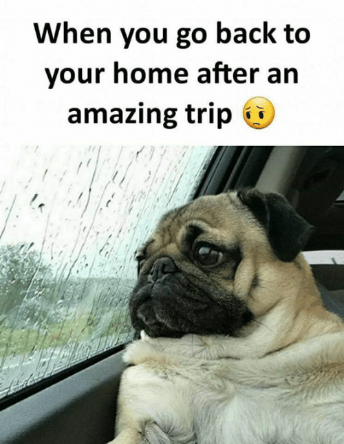 Memes, Home, and Amazing: When you go back to  your home after an  amazing trip «i