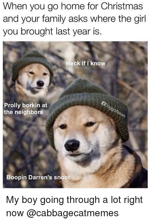 Christmas, Family, and Funny: When you go home for Christmas  and your family asks where the girl  you brought last year is.  Heck if I know  Prolly borkin at  the neighbors  Boopin Darren's snoot My boy going through a lot right now @cabbagecatmemes