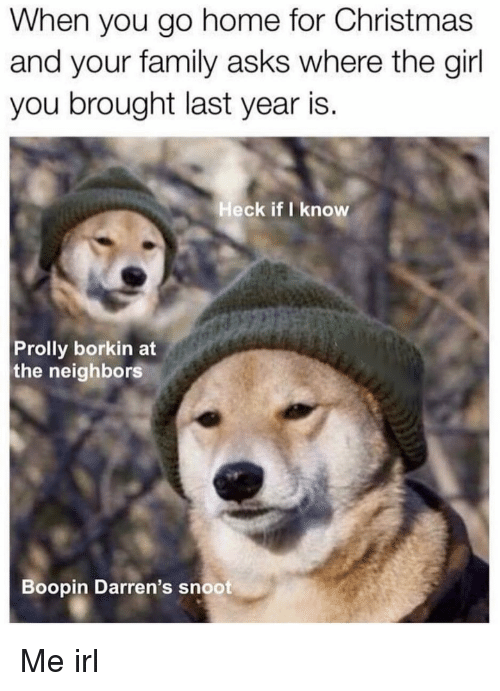 Christmas, Family, and Girl: When you go home for Christmas  and your family asks where the girl  you brought last year is.  Heck if I know  Prolly borkin at  the neighbors  Boopin Darren's snoot Me irl