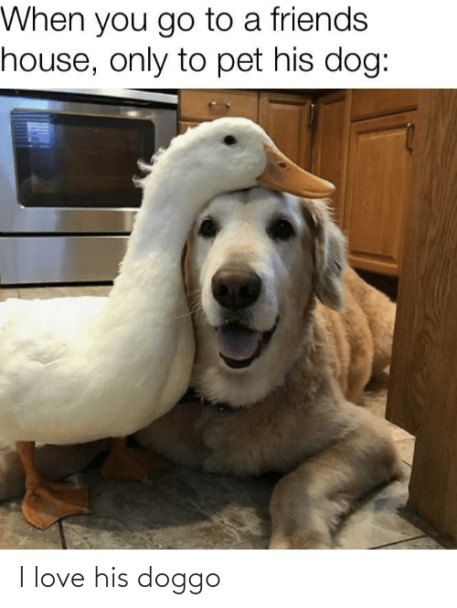 pet: When you go to a friends  house, only to pet his dog: I love his doggo