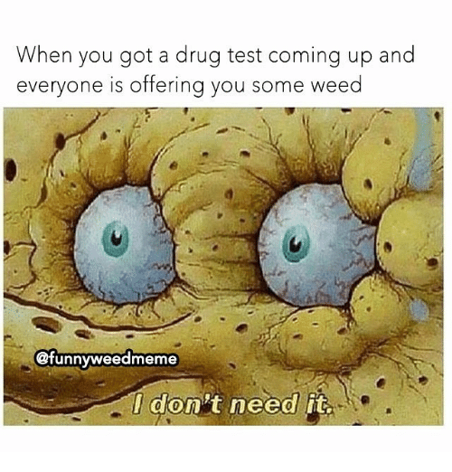 Memes, Weed, and Test: When you got a drug test coming up and  everyone is offerina you some weed  @funnyweedmeme  I don't need it