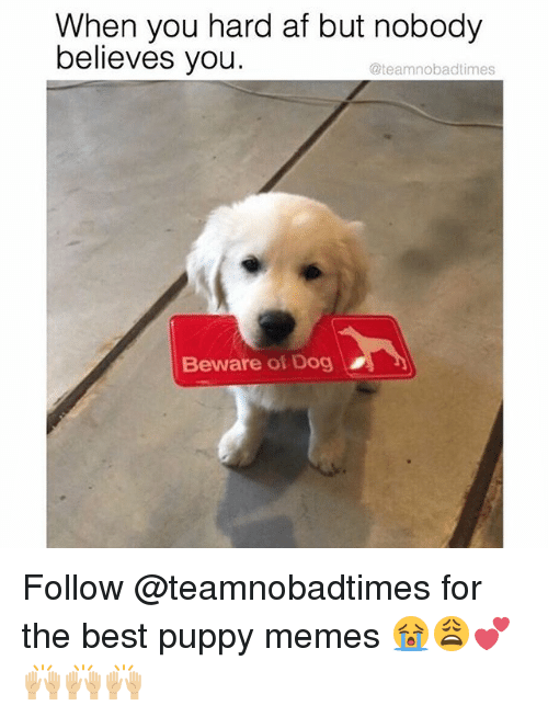 Af, Memes, and Best: When you hard af but nobody  believes you  @teamnobadtimes  Beware of Dog Follow @teamnobadtimes for the best puppy memes 😭😩💕🙌🏼🙌🏼🙌🏼