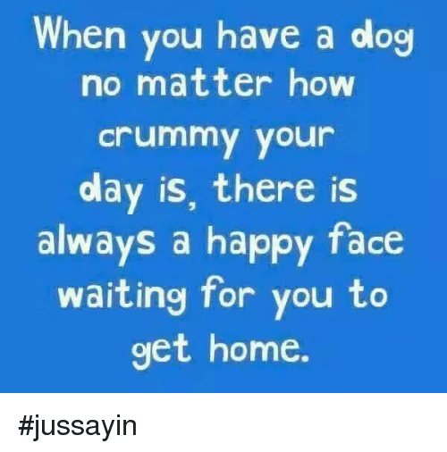 Dank, Happy, and Home: When you have a dog  no matter how  crummy your  day is, there is  always a happy face  waiting for you to  get home. #jussayin