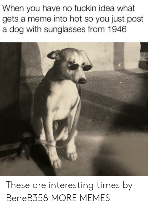 Dank, Meme, and Memes: When you have no fuckin idea what  gets a meme into hot so you just post  a dog with sunglasses from 1946 These are interesting times by BeneB358 MORE MEMES