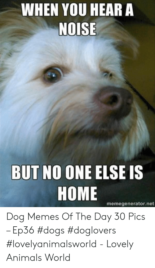 Animals, Dogs, and Memes: WHEN YOU HEAR A  NOISE  BUT NO ONE ELSE IS  HOME  memegenerator.net Dog Memes Of The Day 30 Pics – Ep36 #dogs #doglovers #lovelyanimalsworld - Lovely Animals World