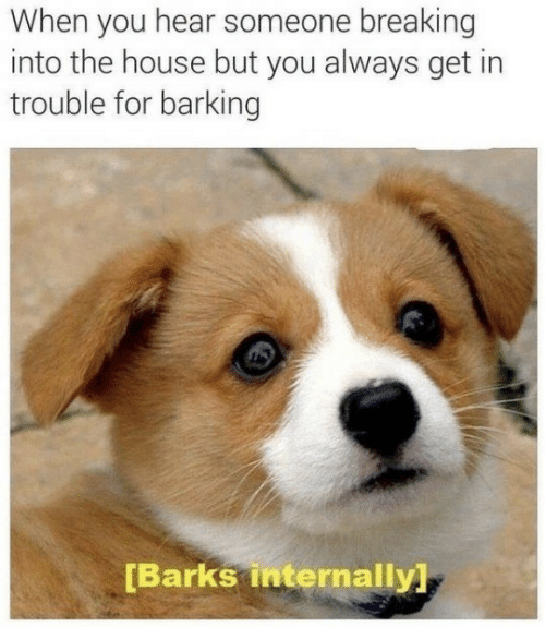 House, You, and For: When you hear someone breaking  into the house but you always get in  trouble for barking  [Barks internally]