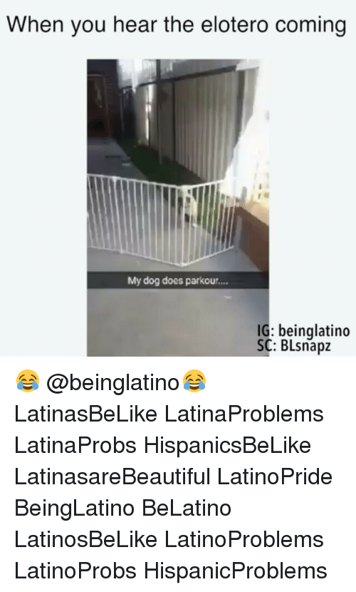 Heared: When you hear the elotero coming  My dog does parkou....  IG: beinglatino  SC: BLsnapz 😂 @beinglatino😂 LatinasBeLike LatinaProblems LatinaProbs HispanicsBeLike LatinasareBeautiful LatinoPride BeingLatino BeLatino LatinosBeLike LatinoProblems LatinoProbs HispanicProblems