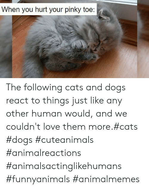 Cats, Dogs, and Love: When you hurt your pinky toe: The following cats and dogs react to things just like any other human would, and we couldn't love them more.#cats #dogs #cuteanimals #animalreactions #animalsactinglikehumans #funnyanimals #animalmemes