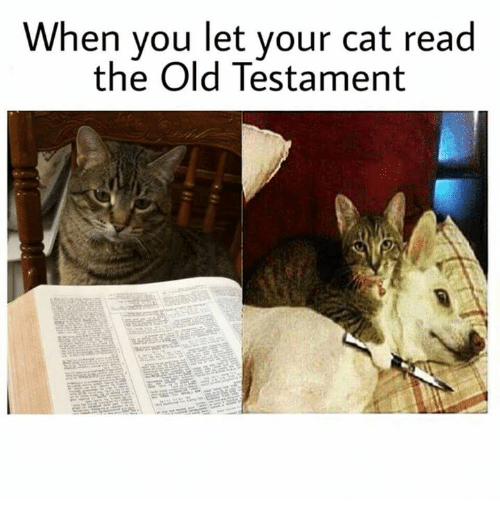 old testament: When you let your cat read  the Old Testament