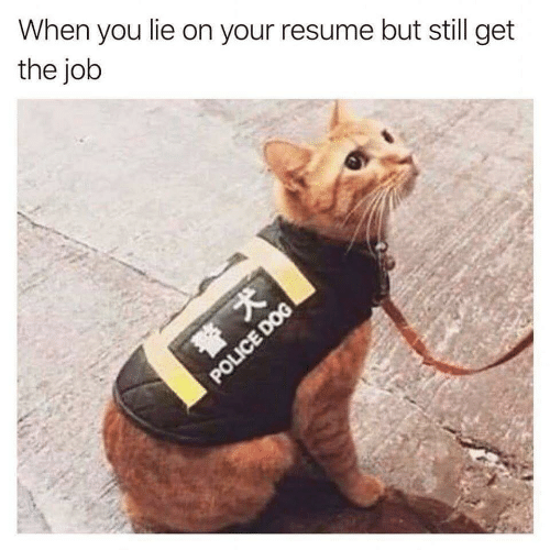 the job: When you lie on your resume but still get  the job  POLICE DOG