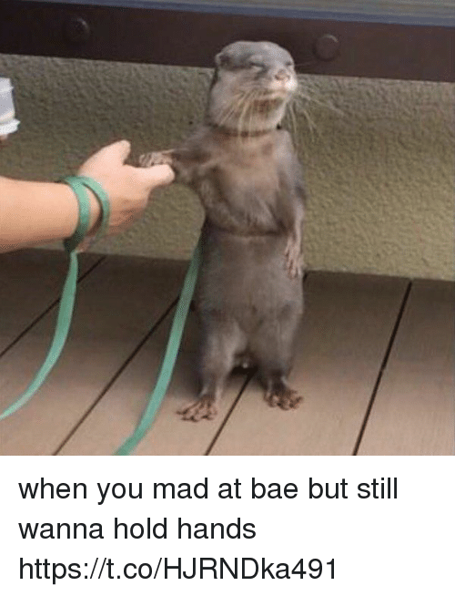 Bae, Girl Memes, and Mad: when you mad at bae but still wanna hold hands https://t.co/HJRNDka491