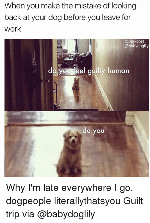 Memes, Work, and Baby: When you make the mistake of looking  back at your dog before you leave for  work  a bark post  @baby doglily  do you teel guilty human  do you Why I'm late everywhere I go. dogpeople literallythatsyou Guilt trip via @babydoglily
