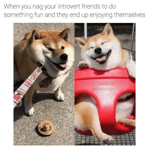 Friends, Introvert, and Fun: When you nag your introvert friends to do  something fun and they end up enjoying themselves