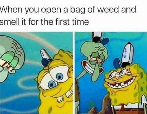 Smell, Weed, and Time: When  you open a bag of weed and  it for the first time  smell