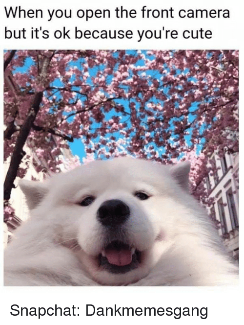 Cute, Memes, and Snapchat: When you open the front camera  but it's ok because you're cute Snapchat: Dankmemesgang