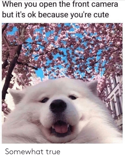 Cute, True, and Camera: When you open the front camera  but it's ok because you're cute Somewhat true