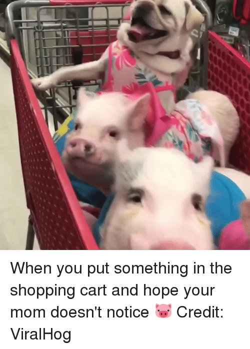 Shopping, Hope, and Mom: When you put something in the shopping cart and hope your mom doesn't notice 🐷  Credit: ViralHog