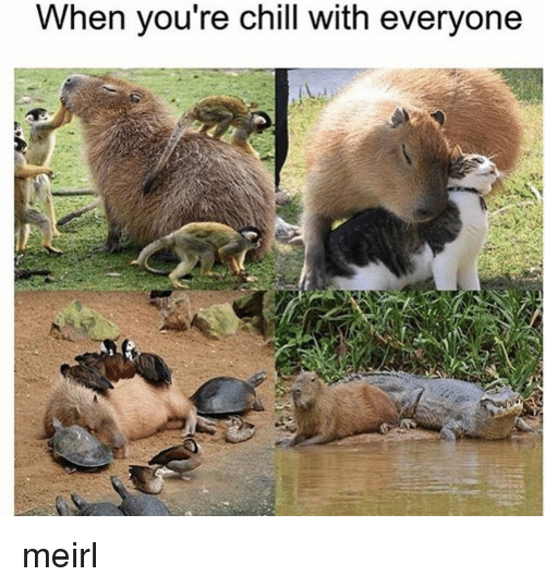 Chill, MeIRL, and You: When you re chill with everyone meirl