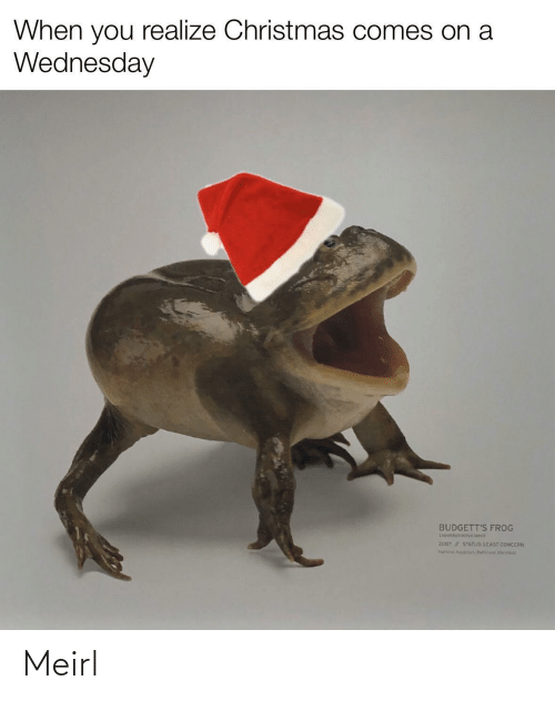 Wednesday: When you realize Christmas comes on a  Wednesday  BUDGETT'S FROG  Lepidobatach ueva  2007 STATUS LEAST CONCERN  Na Aguir, Butin Mert Meirl