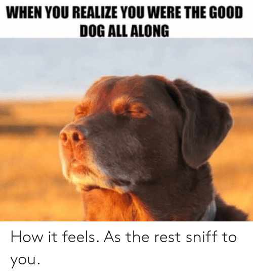 Good, How, and Dog: WHEN YOU REALIZE YOU WERE THE GOOD  DOG ALL ALONG How it feels.  As the rest sniff to you.