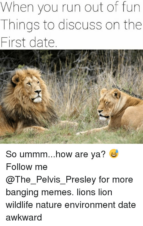 Memes, Run, and Awkward: When you run out of fun  Things to discuss on the  First date  esl So ummm...how are ya? 😅 Follow me @The_Pelvis_Presley for more banging memes. lions lion wildlife nature environment date awkward