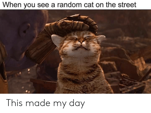 Cat, Random, and Day: When you see a random cat on the street This made my day