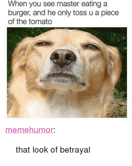 "Tumblr, Blog, and Http: When you see master eating a  burger, and he only toss u a piece  of the tomato <p><a href=""http://memehumor.net/post/171295024278/that-look-of-betrayal"" class=""tumblr_blog"">memehumor</a>:</p>  <blockquote><p>that look of betrayal</p></blockquote>"