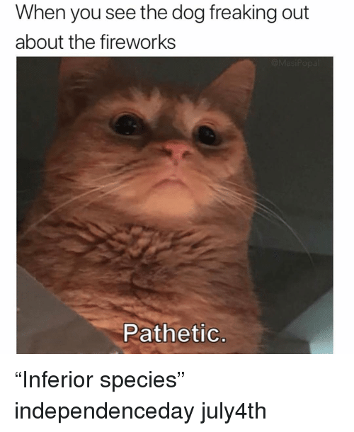 """Funny, Fireworks, and Dog: When you see the dog freaking out  about the fireworks  Pathetic """"Inferior species"""" independenceday july4th"""