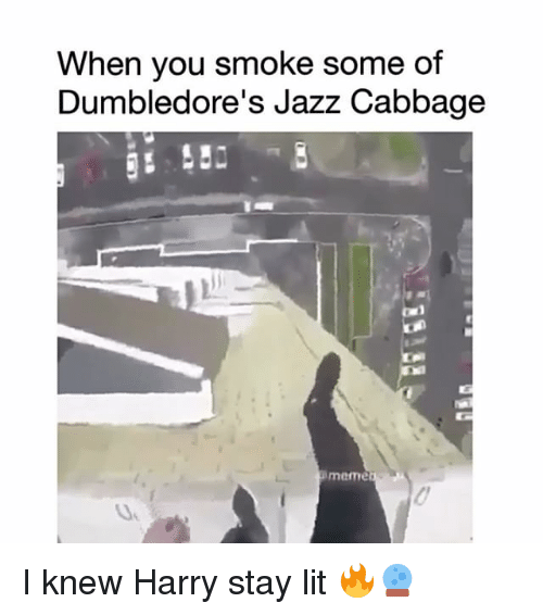 Lit, Meme, and Memes: When you smoke some of  Dumbledore's Jazz Cabbage  meme I knew Harry stay lit 🔥🔮