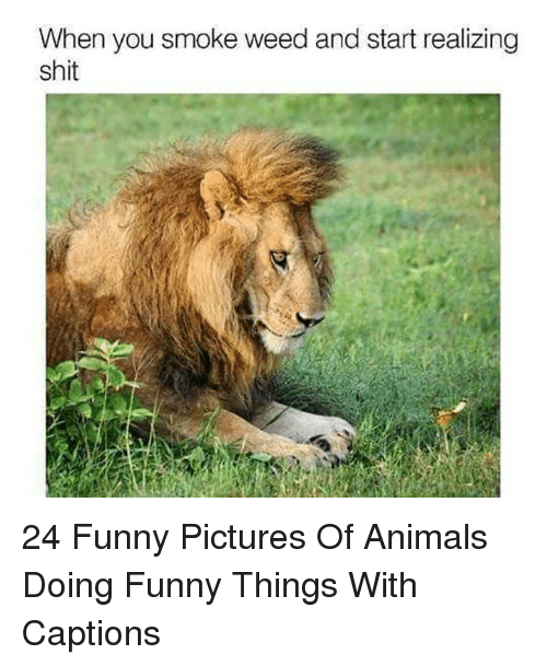 Animals, Funny, and Shit: When you smoke weed and start realizing  shit 24 Funny Pictures Of Animals Doing Funny Things With Captions