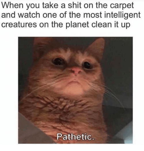 Shit, Watch, and Creatures: When you take a shit on the carpet  and watch one of the most intelligent  creatures on the planet clean it up  Pathetic
