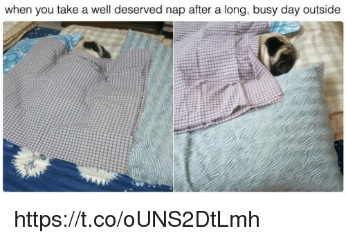 Busy Day: when you take a well deserved nap after a long, busy day outside https://t.co/oUNS2DtLmh