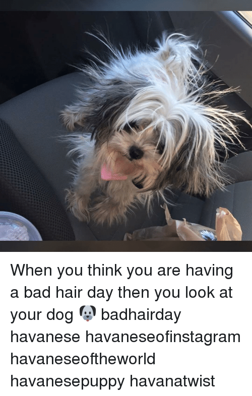 When You Think You Are Having A Bad Hair Day Then You Look At Your