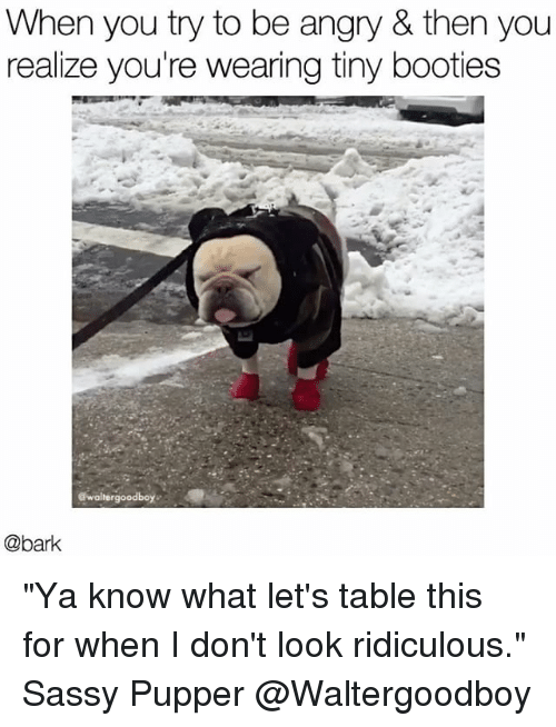 "booties: When you try to be angry & then you  realize you're wearing tiny booties  @bark ""Ya know what let's table this for when I don't look ridiculous."" Sassy Pupper @Waltergoodboy"
