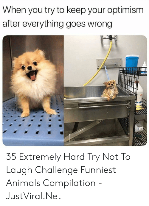 challenge: When you try to keep your optimism  after everything goes wrong 35 Extremely Hard Try Not To Laugh Challenge Funniest Animals Compilation - JustViral.Net