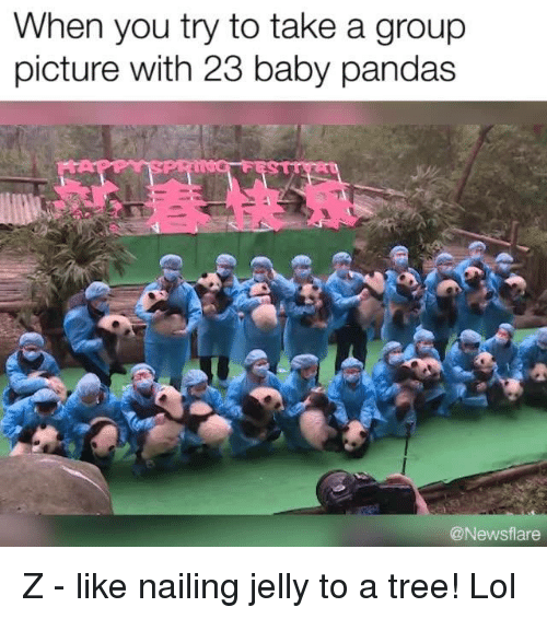 Memes, Baby Panda, and 🤖: When you try to take a group  picture with 23 baby pandas  @News flare Z - like nailing jelly to a tree! Lol