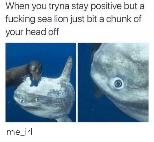 chunk: When you tryna stay positive but a  fucking sea lion just bit a chunk of  your head off me_irl
