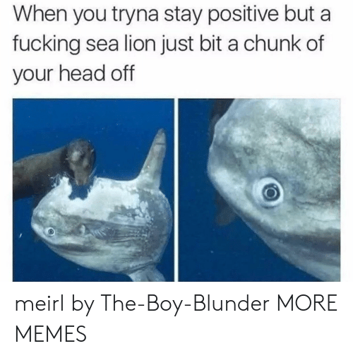 Dank, Fucking, and Head: When you tryna stay positive but a  fucking sea lion just bit a chunk of  your head off meirl by The-Boy-Blunder MORE MEMES