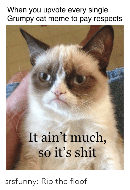 Meme, Shit, and Tumblr: When you upvote every single  Grumpy cat meme to pay respects  It ain't much  so it's shit srsfunny:  Rip the floof