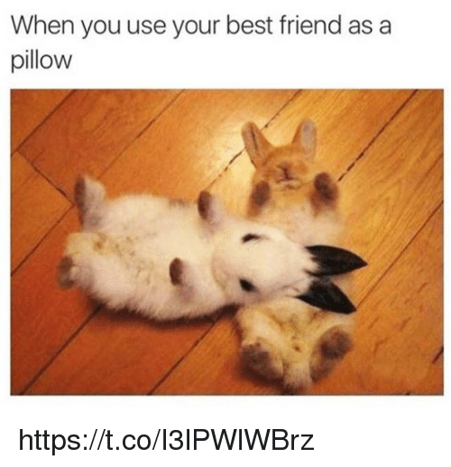 Best Friend, Memes, and Best: When you use your best friend as a  pillow https://t.co/I3lPWlWBrz