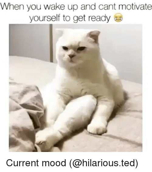 Funny, Mood, and Ted: When you wake up and cant motivate  yourself to get ready Current mood (@hilarious.ted)