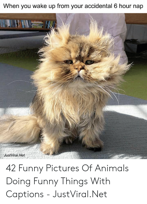 Funny Pictures Of: When you wake up from your accidental 6 hour nap  JustViral Net 42 Funny Pictures Of Animals Doing Funny Things With Captions - JustViral.Net