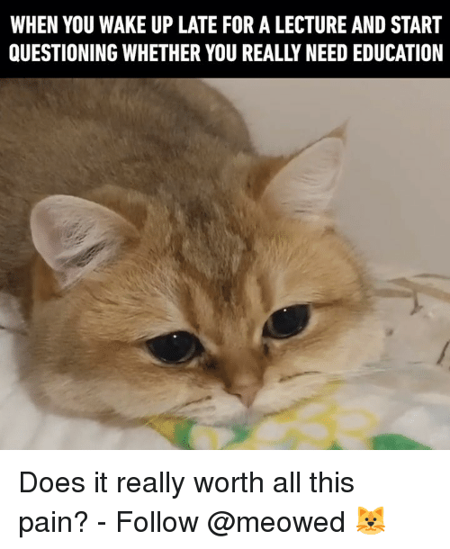 Memes, Pain, and 🤖: WHEN YOU WAKE UP LATE FOR A LECTURE AND START  QUESTIONING WHETHER YOU REALLY NEED EDUCATION Does it really worth all this pain? - Follow @meowed 🐱