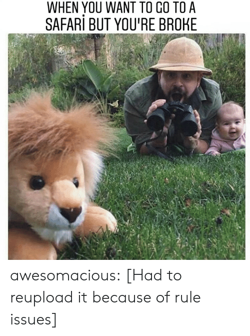 Tumblr, Blog, and Safari: WHEN YOU WANT TO CO TO A  SAFARi BUT YOU'RE BROHE awesomacious:  [Had to reupload it because of rule issues]