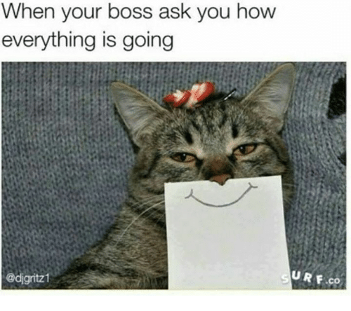 When Your Boss Ask You How Everything Is Going Urf Co Grumpy Cat